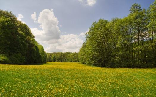 20060515144548_meadow.jpg